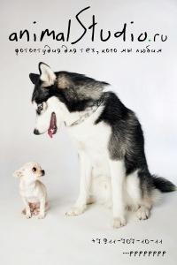 animalStudio